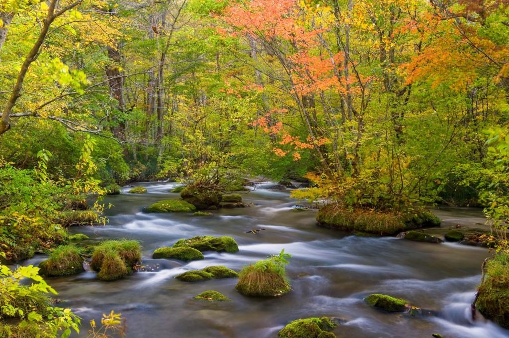 Oirase Gorge- Autumn